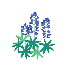 Lupine flat purple meadow vector