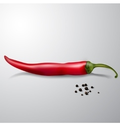 Red hot chili pepper isolated vector