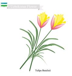 Tulipa Batalinii Flowers Flower of Uzbekistan vector image