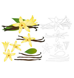 Vanilla planifolia flower outline vector