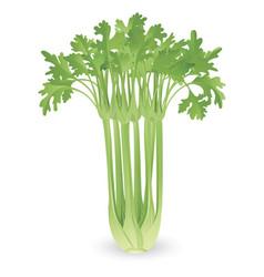 bunch of celery vector image vector image