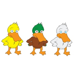 Cartoon ducks vector