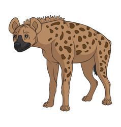 color with spotted hyena vector image