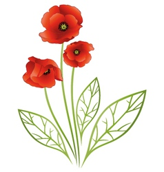 Flowers tendril poppies vector