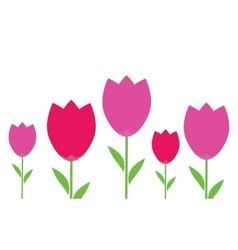 pink and red flowers tulips vector image