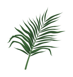 Tropical leave palm tree image vector