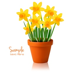 daffodil flower background vector image vector image