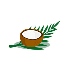 brown coconut isolated on white background vector image