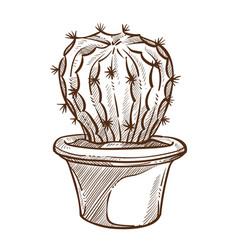 cactus plant in pot sketch indoor flower vector image