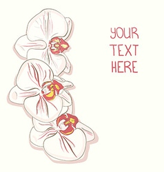 Orchids12 vector image