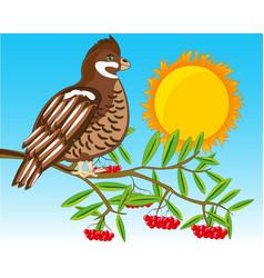 Timber hazel grouse on branch rowanberry vector