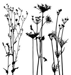 traced plants and weeds collection for designers vector image vector image