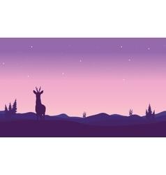 Silhouette of zebra in hills vector image