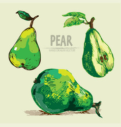 digital detailed color pear hand drawn vector image