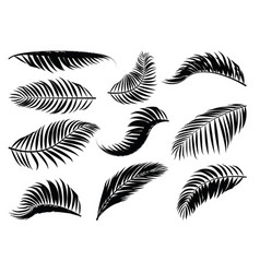 palm leaf silhouette vector image