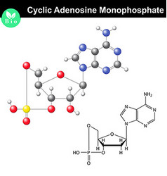 Cyclic adenosine monophosphate chemical structure vector