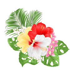 Tropical hibiscus white yelow red and orchids vector