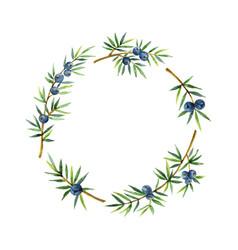 Watercolor wreath plants juniper isolated on white vector