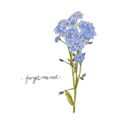 Wild flower forget-me-not hand drawn in color vector