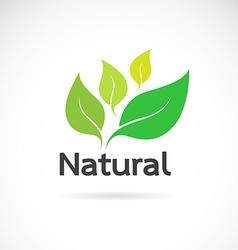 Natural logo design vector image