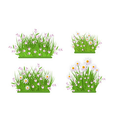 green grass chamomile daisy flowers bush vector image