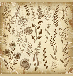 hand drawn plant herb flowers vector image
