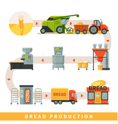 stages of production of bread growing cereals vector image