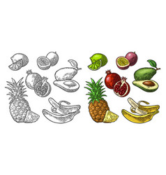 set tropical fruits pineapple lime banana vector image