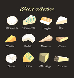a collection cheeses vector image