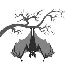bat on branch vector image
