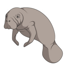 color with manatee a sea cow vector image