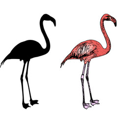 flamingo bird silhouette and sketch vector image