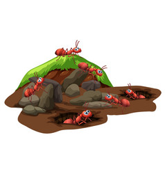 Group of ants living underground vector