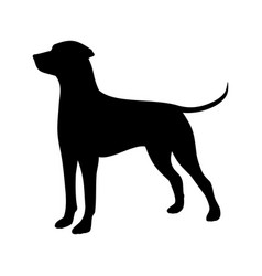 Hunting dog vector