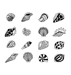 seashells sketch icons vector image
