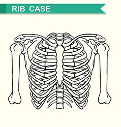 Diagram showing rib case vector image vector image