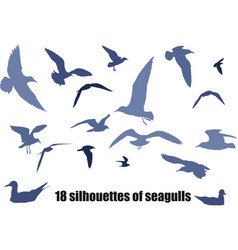 seagulls vector image vector image