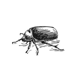 big bug isolated hand drawn sketch vector image