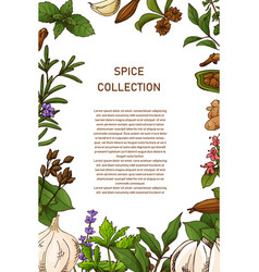 Card design with aromatic plants sketch hand vector