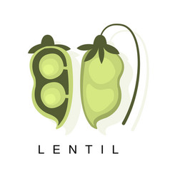 Lentil pod infographic with vector