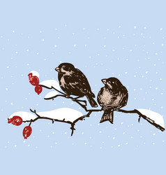 Sparrows sit on branches in a winter day vector