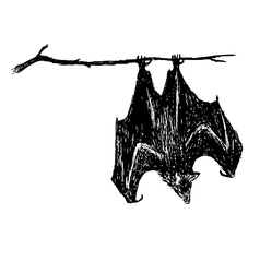 Upside down bat vector