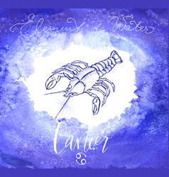 astrology sign cancer vector image vector image