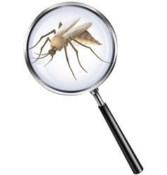 Mosquito through magnifying glass vector image
