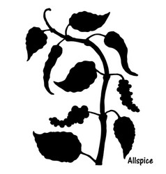 natural allspice botanical hand drawn silhouette vector image