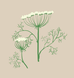 Set of floral graphic design elements dill vector