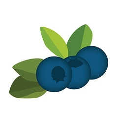 Blueberry leaves and berries vector image vector image