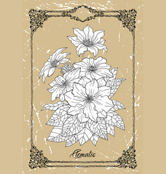 black and white drawing clematis flower vector image