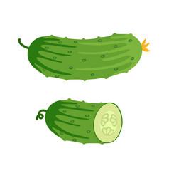 Cucumber and half cucumber vector