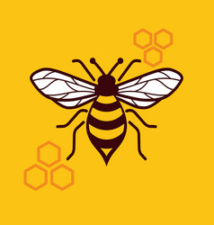 honey bee image vector image
